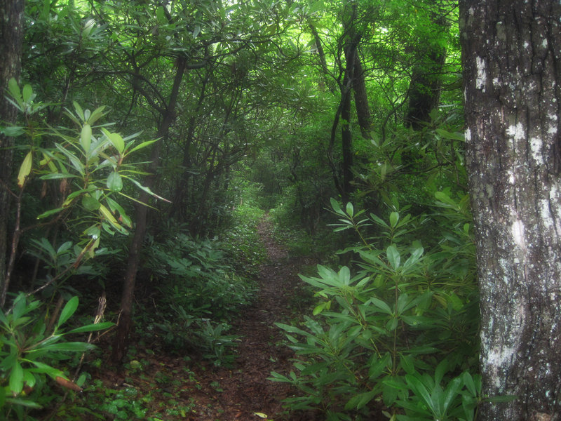 Lush forest on Bad Fork Trail
