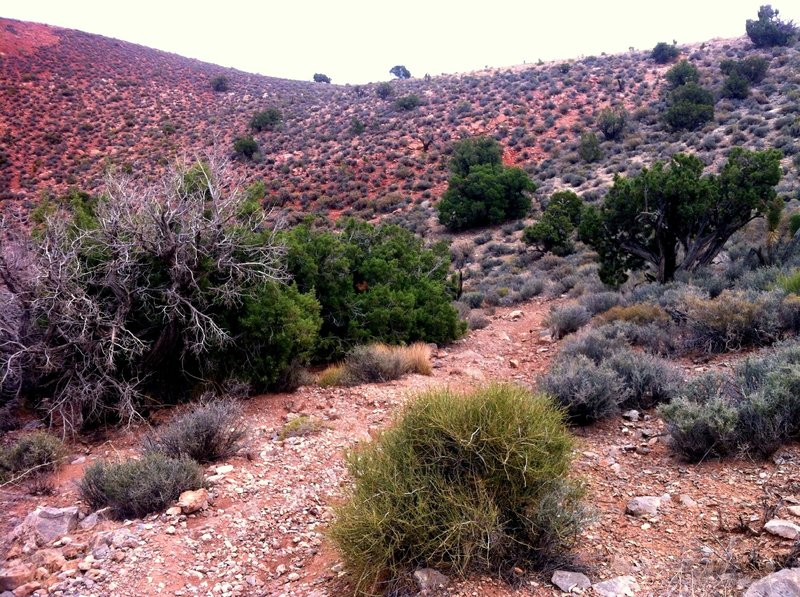 A great section of trail on Dead Horse Loop