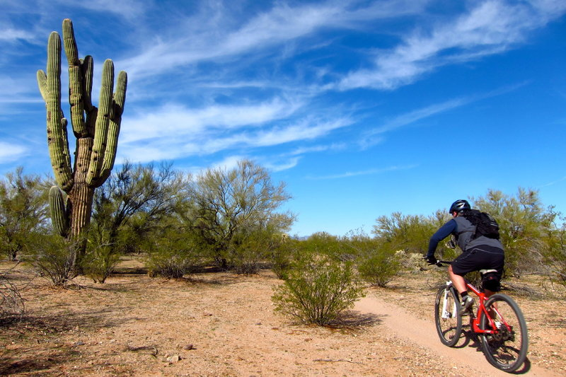Tearing up the fast desert terrain of the awesome Fantasy Island trail network.