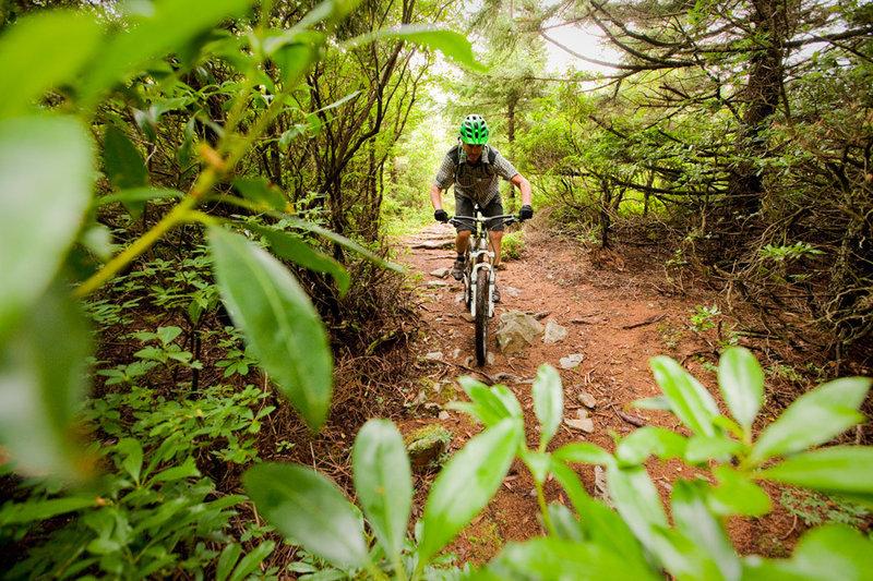 Huckleberry - a pedal-fest on Spruce Mountain