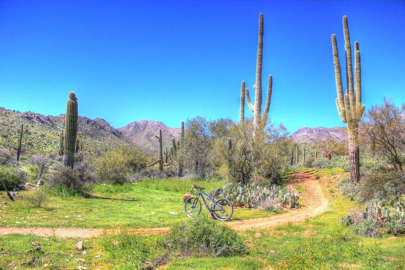 Coachwhip Trail