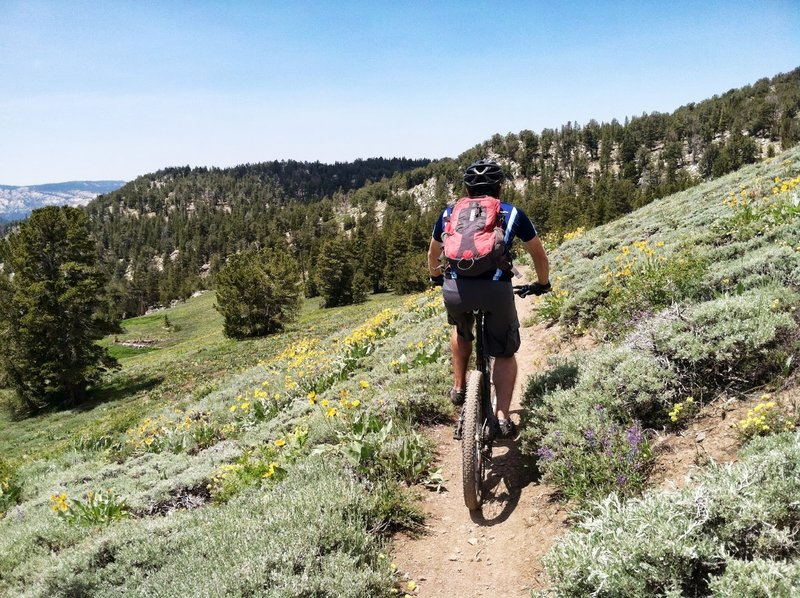 Great views and lung busting climbs through this section of the Tahoe Rim Trail