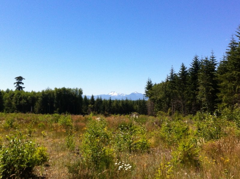 View from the edge of one of the clear cut areas looking at some pretty mountains in the distance.