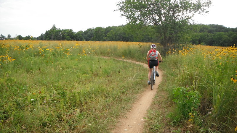 Summer wildflowers on the restored prairie.