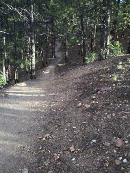 Mad Hatter Trail northbound.