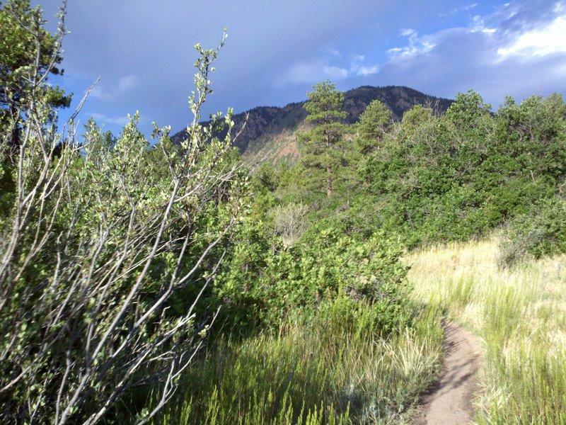 Midway up Twisty Oaks with Mount Herman in the background.  Scrub oak brackets the trail.