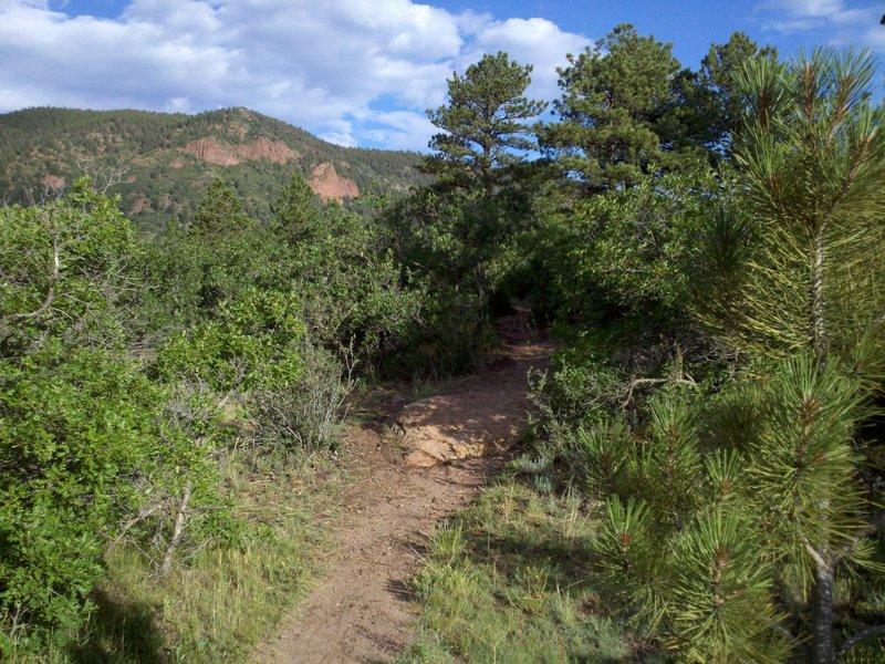 Easy rock obstacle along Twisty Oaks; Mount Herman is in the background