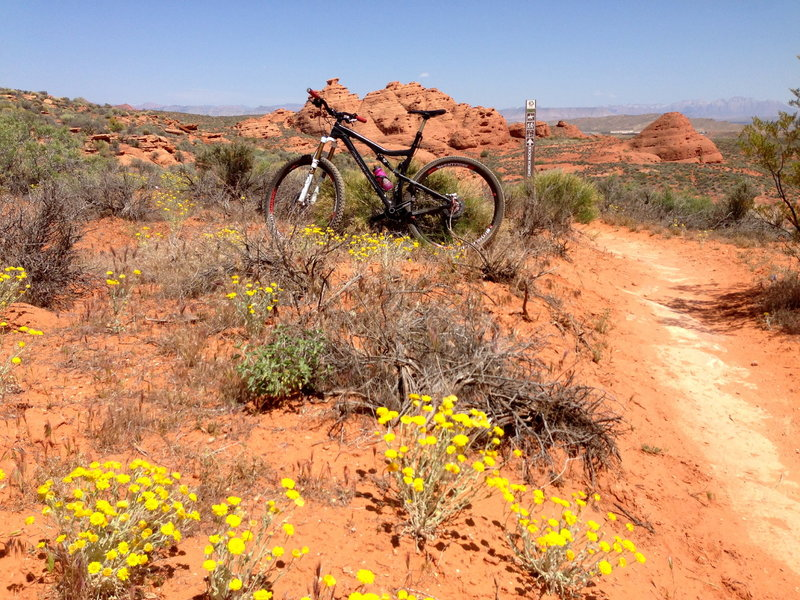 Spring flowers, singletrack, and Church Rocks (north) in the background.