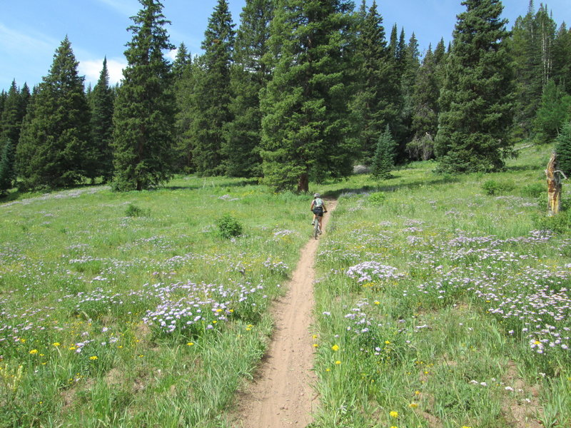 buff singletrack and meadows of flowers