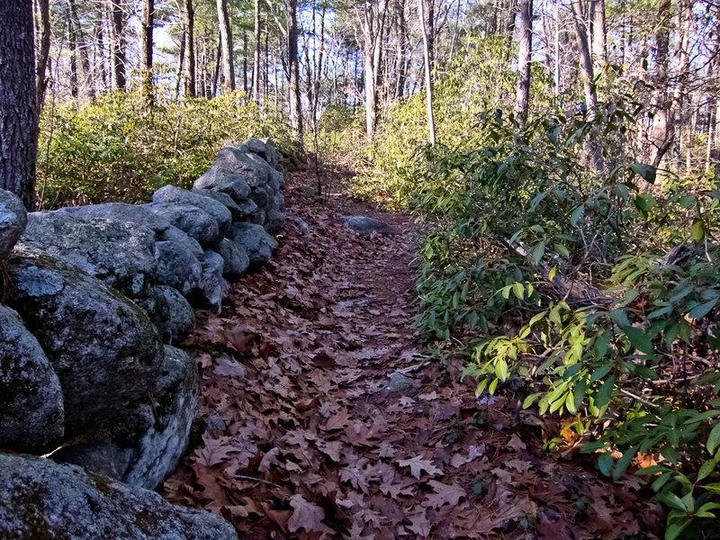 Friends Trail (Willard Brook SF)