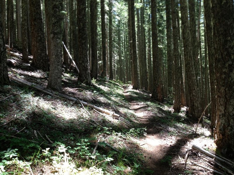 Singletrack, just like this, for miles.