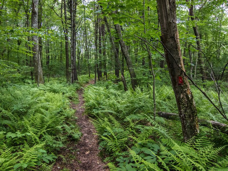Access trail to Steele Farm (Boxborough, MA)