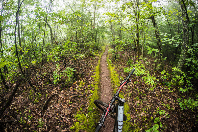 smooth singletrack, for a couple hundred feet
