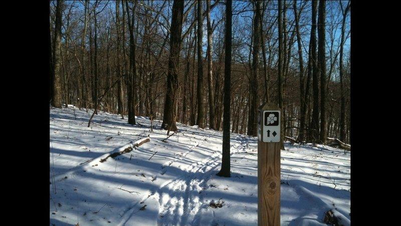 Dogwood trail marker