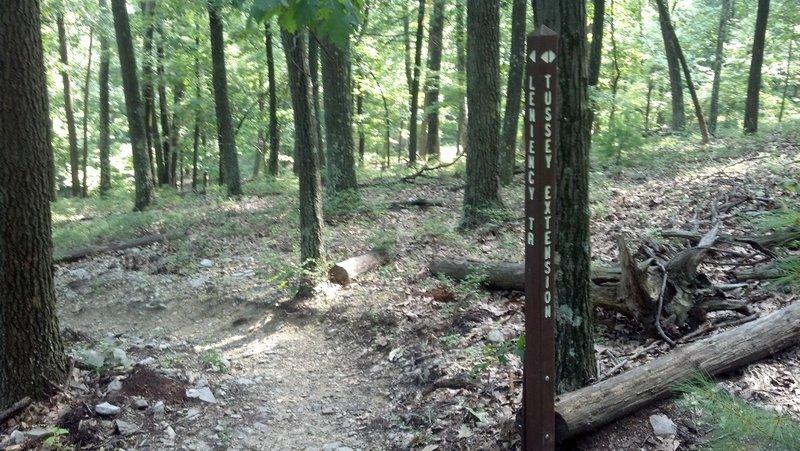 Leniency trail