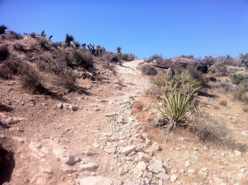 A nice section of Bunny Trail at Cowboy Trails