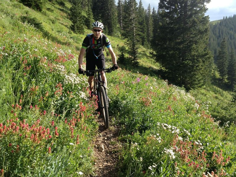 Amazing flowers on Dead Tree Trail