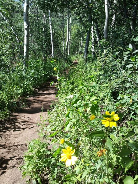 Typical conditions on Lower Jenni's Trail