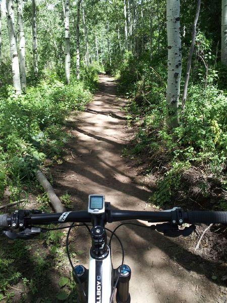 Deep in the aspen zone on Jenni's Trail