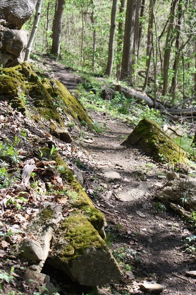 Great looking trail!