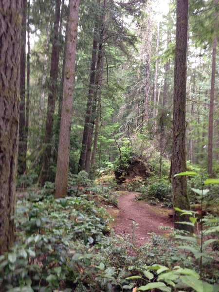 Sunday late a.m. ride--felled tree (not directly on singletrack trail)
