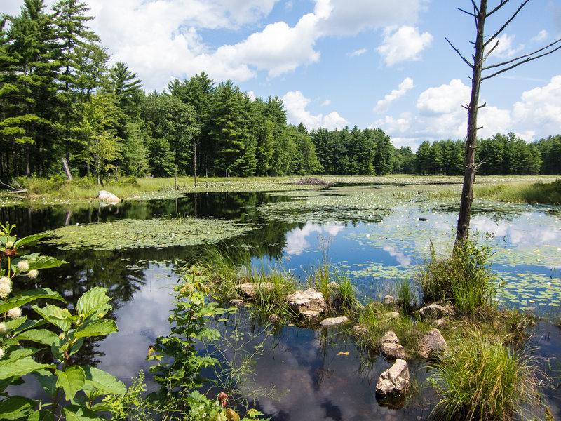Beaver pond at Beaver Brook Association land