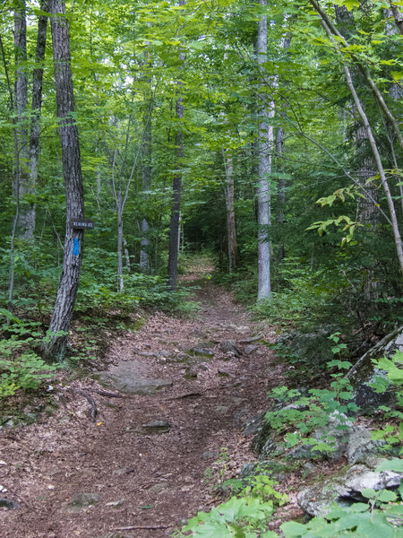 Elkins road, another slightly more technical trail in Beaver Brook.
