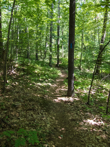 Not all trail on Beaver Brook land that permit biking are doubletracks or dirt roads. There are also some nice singletrack sections.