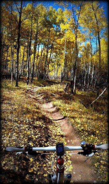 The Green Mountain Trail dives through an aspen grove.