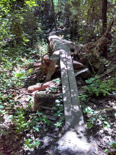 It may look terrifying, but that log is more than 2 feet wide, so give it a shot!