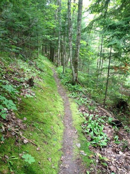 Moss covered side hill on Edwards Trail.
