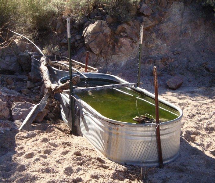 Bathtub Spring in the Ripsey Wash