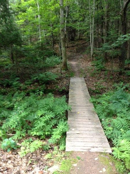 Cedar bridge on Cedar Bridge Trail.