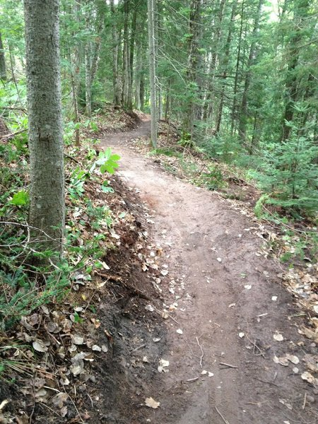 Newly built reroute on Sleeping Bear Loop. Thanks Jesse, Lori, and IMBA!