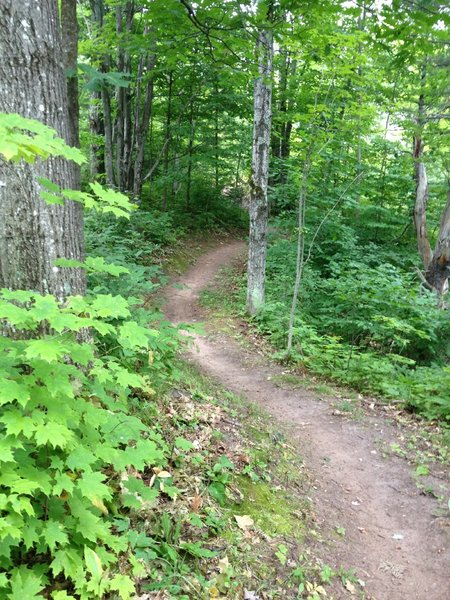 Nice flowing section on Hillside Trail.