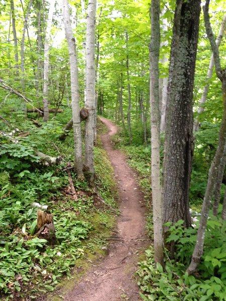 More Hillside Trail flowing along the hillside.