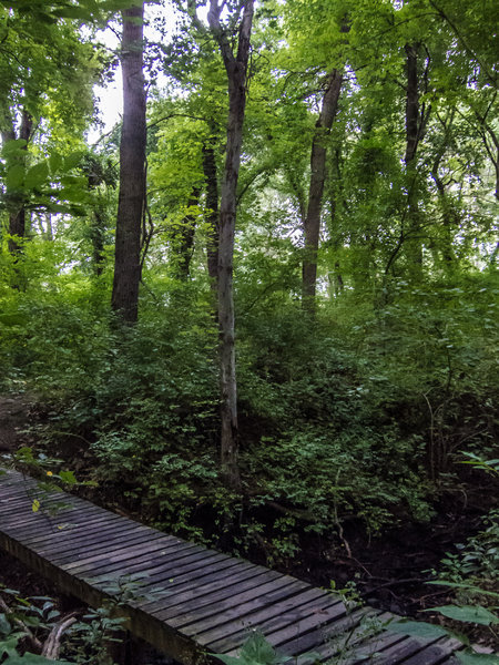 The vines on the tall trees make this area look very rainforest like