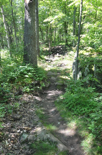 This is the most challenging of the rock gardens at the Woolly trails!