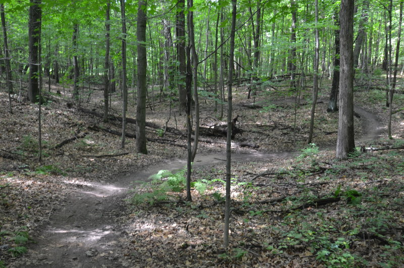 Flowy singletrack on the Wissihickon trail.