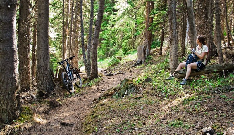 Pitstop'n<br> One of the many beautiful forested sections of perfect single track