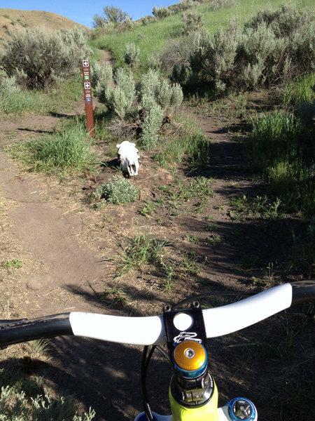 Boneyard Trail marker Avimor