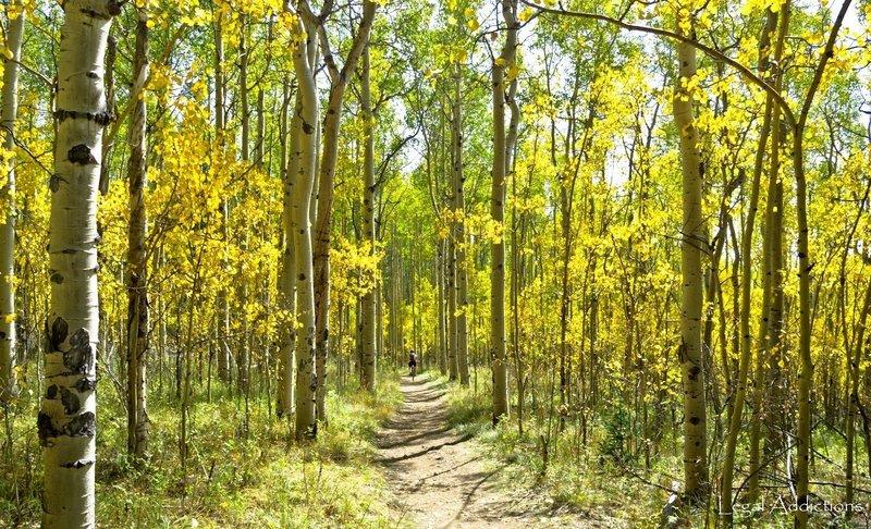 Colorado's version of Oak Alley
