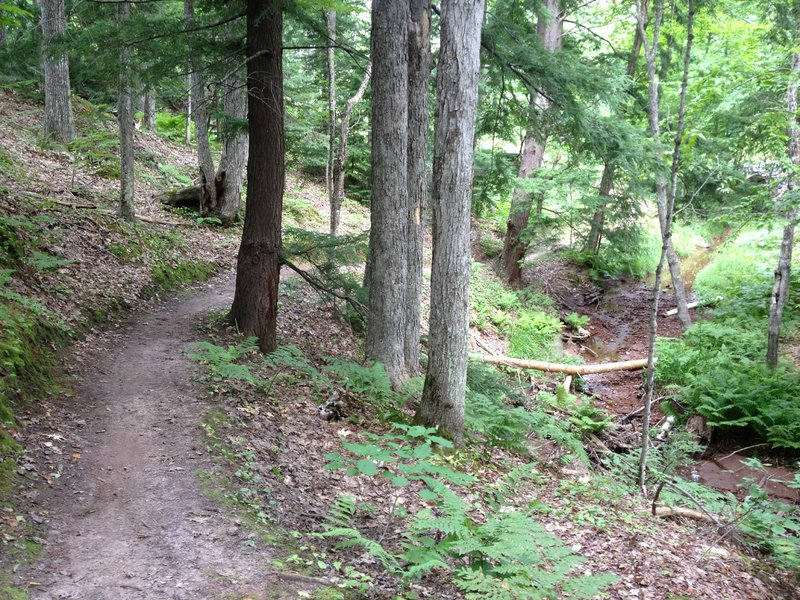 Twilight Zone Loop climbs along Peepsock Creek amid the hemlocks.