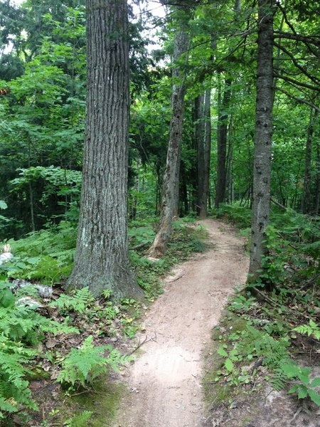 Inner Peace Loop rolling under the forest canopy.