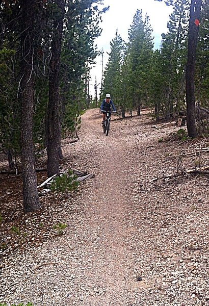 You can really rip through this part of the trail