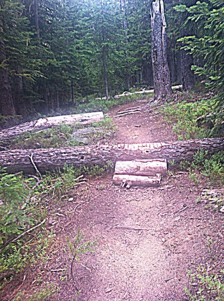One of several log roll overs