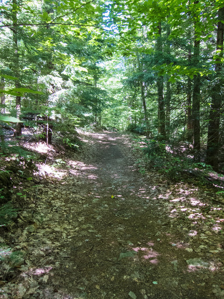 This section of Lynx Trail is smooth and fast.
