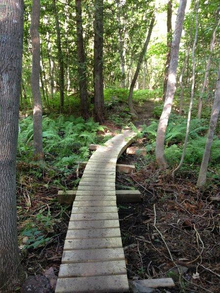 Curving boardwalk over lowlands on Barking Frog Loop