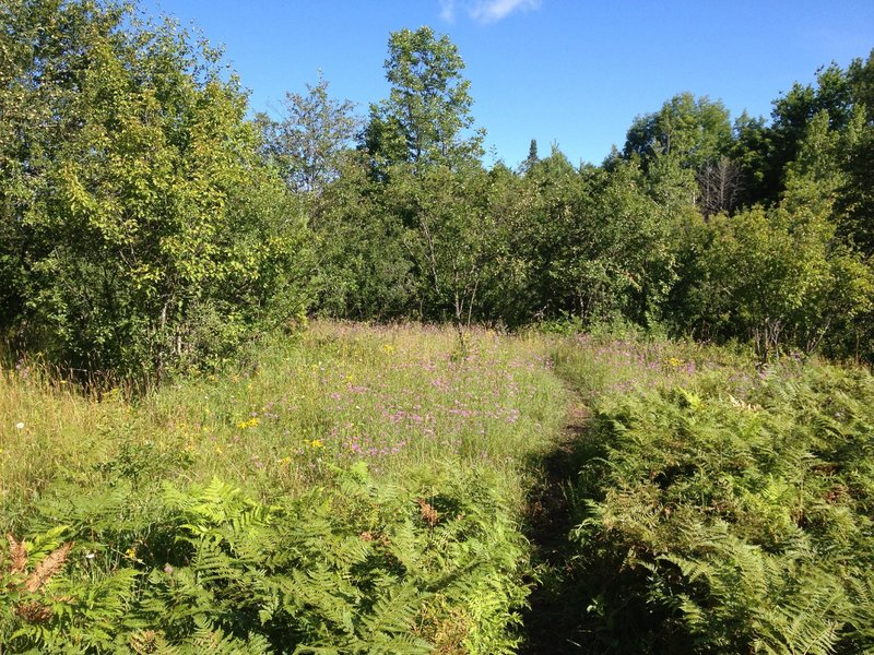 Sunny meadow section of Barking Frog Loop.