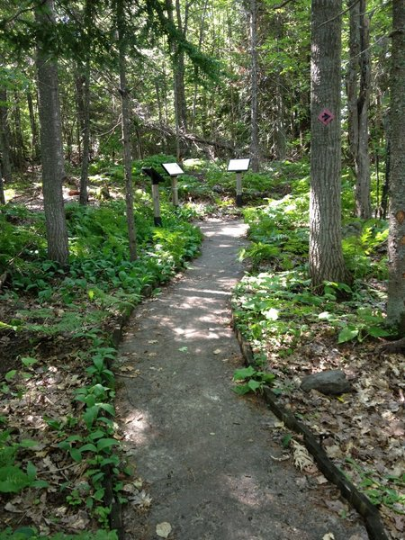 Short intersection with Houghton High School Forest interpretive nature loop.